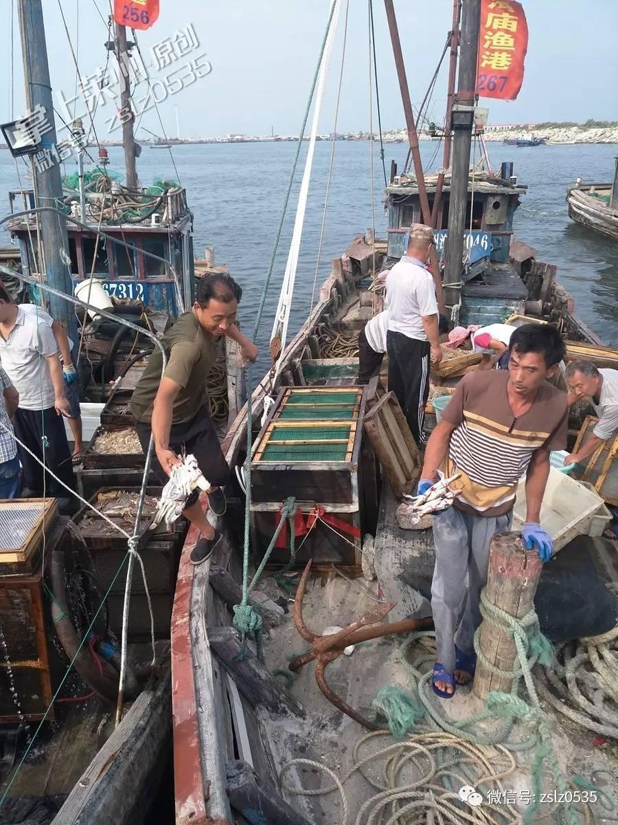 莱州开海,渔港疯抢海鲜!买两只螃蟹124元(组图)